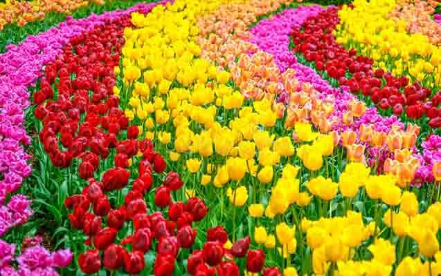 Çiçek Yetiştiriciliği Yapmak, Masrafları, Kar Marjı