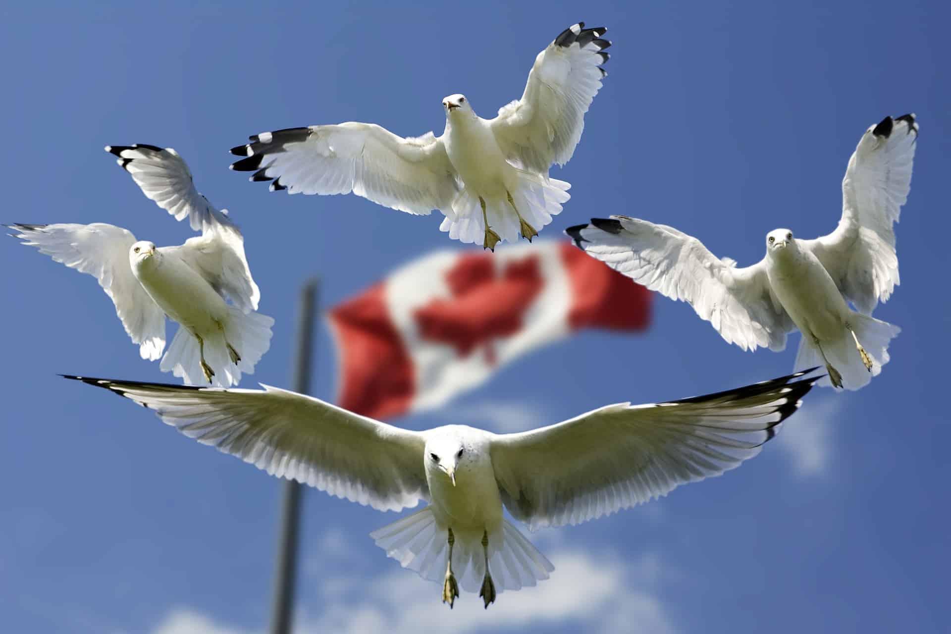 2020'de Kanada'da Çalışmak İçin Tercih Edebileceğiniz Meslekler