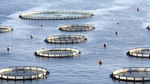Balık Çiftliği Kurmak